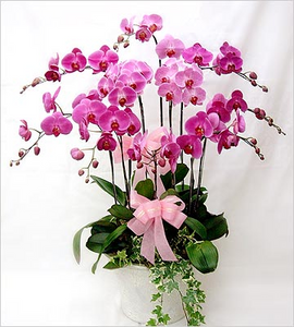 The One - www.bloomfloralshop.com