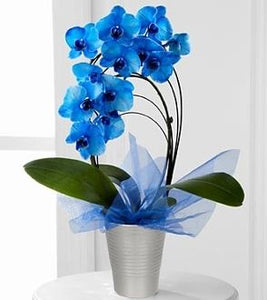 To blue to be true - www.bloomfloralshop.com