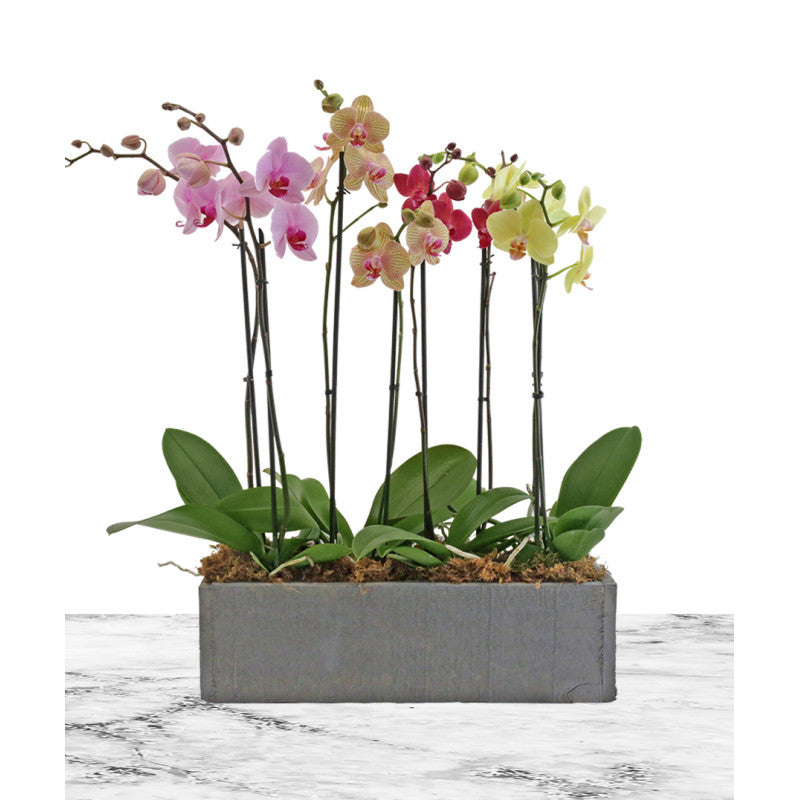 orchid planter delivery chicago il florist