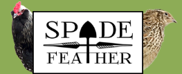 Spade & Feather