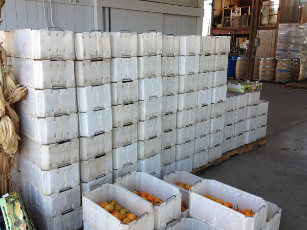 A lot of tomatoes to process, ~1500 lbs