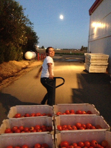 Tomatoes being hand-carted away into production room