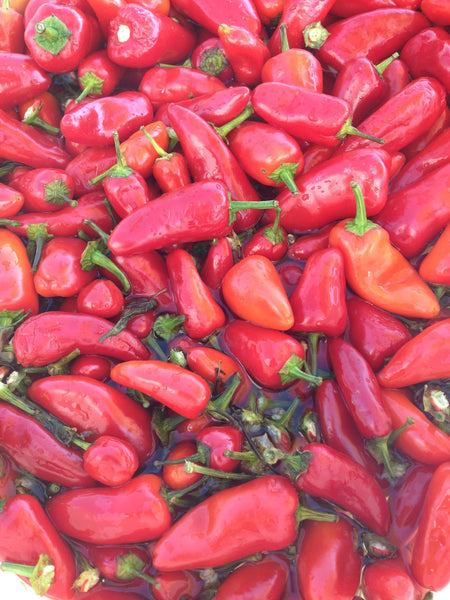 Chili peppers for Srirachup