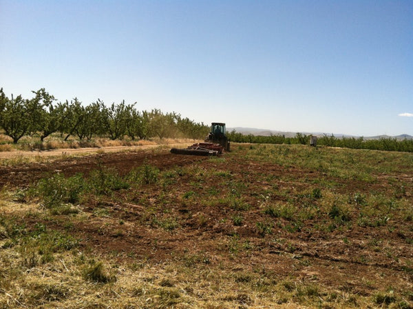 Breaking ground on our acre of land for tomato growing