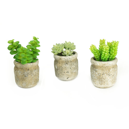 Set of 3 Realistic Faux Succulent Plants in Cement Pot Planter