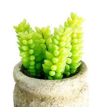 Load image into Gallery viewer, Set of 3 Realistic Faux Succulent Plants in Cement Pot Planter