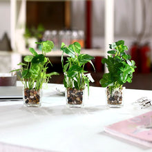 "Load image into Gallery viewer, Set of 3 9.5"" Faux Pilea Peperomioides Clovers in glass square planters / artificial plant"