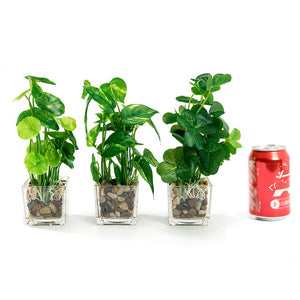 "Set of 3 9.5"" Faux Pilea Peperomioides Clovers in glass square planters / artificial plant"
