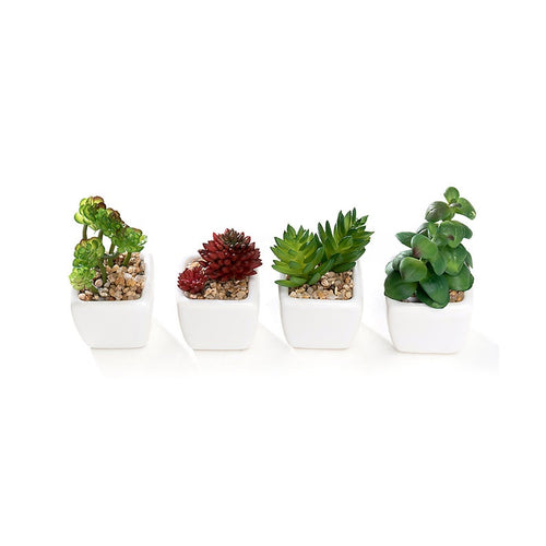 Set of 4 Different Mini Artificial Succulent Plants Potted in Cube-Shape White Ceramic Pot