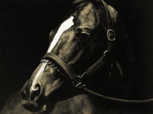 Load image into Gallery viewer, 'Horse stopped to look back' Oil Painting Print on Wrapped Canvas