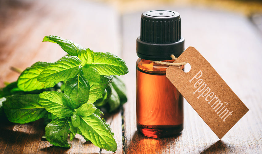 /blogs/skinny-talk/why-skinny-only-uses-rare-peppermint-essential-oil