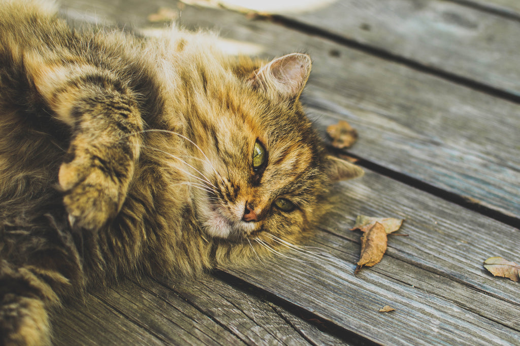 Does your feline friend have cat anxiety? This is how to calm cats