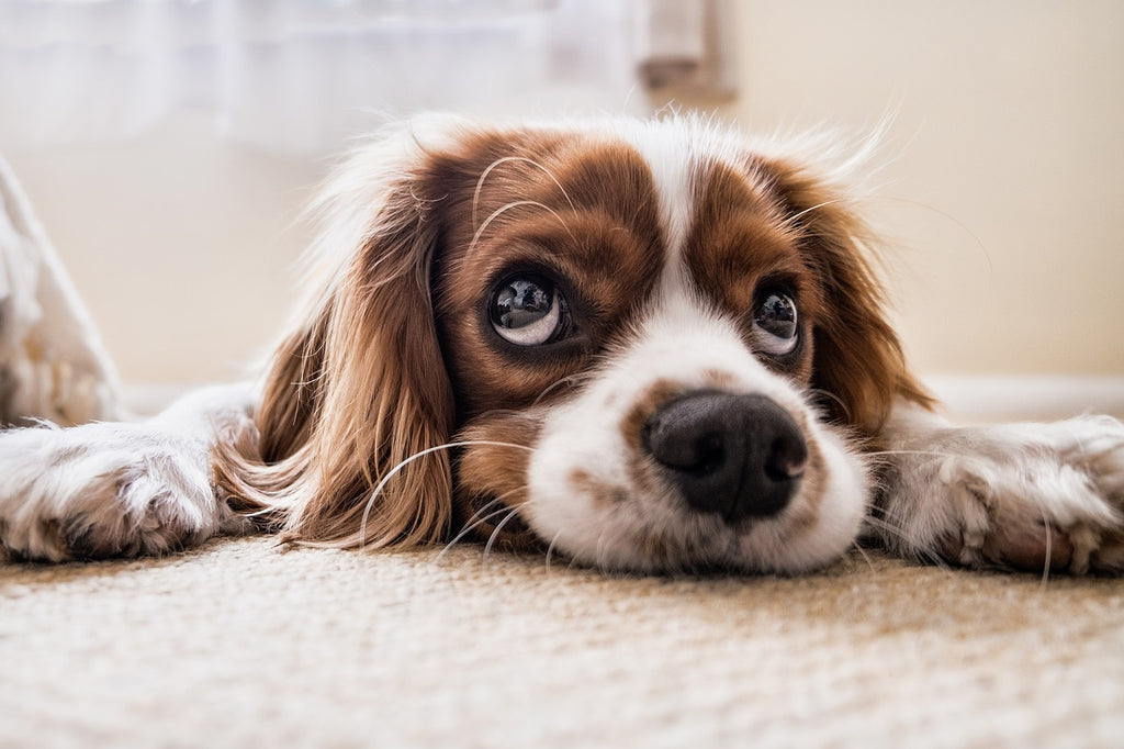 Treat dog hot spots with coconut oil for natural relief