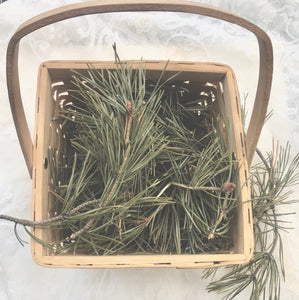 Enchanted Forest Mail Out Pack ~Pine Needle Tea/ Elixir