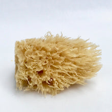 Load image into Gallery viewer, Wool Sea Sponge