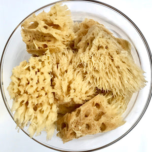 Wool Sea Sponges in a bowl