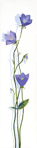 Flower - Blue Bells