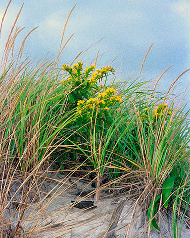 Spring On Dunes