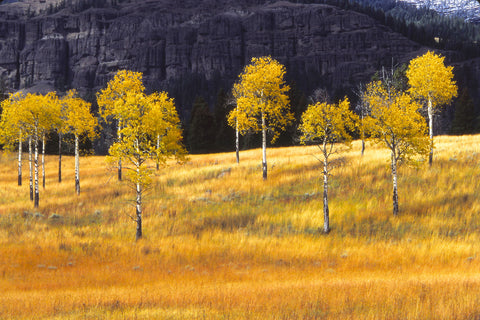 Aspen Grove, Autumn Meadow