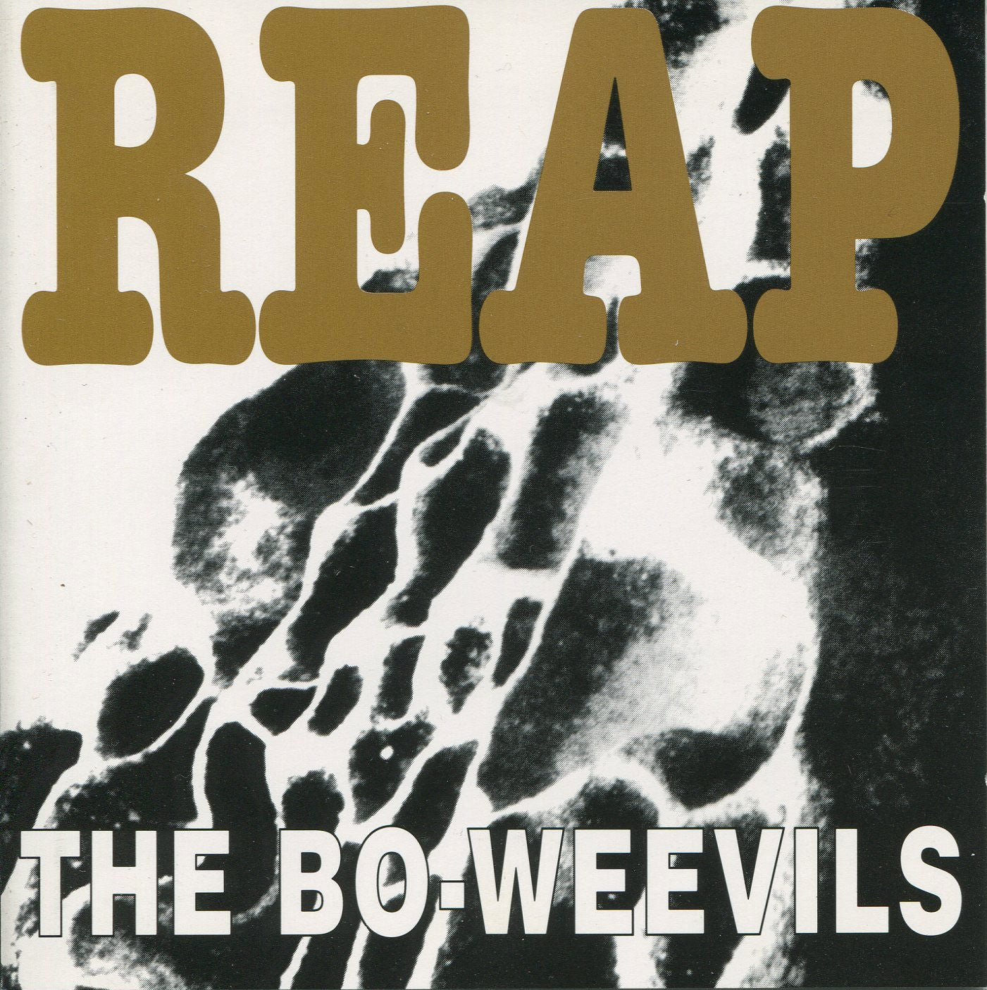 The Bo-Weevils - Reap