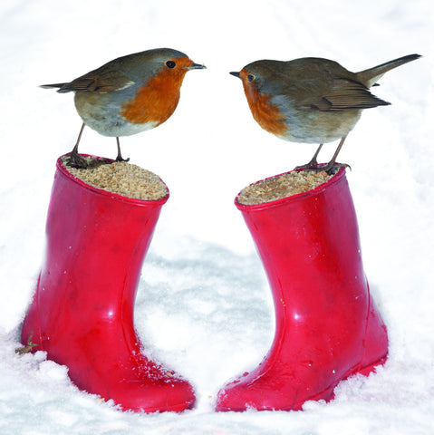 Robins on Wellies - pack of 10