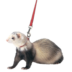 Ferret Harness And Lead Combo