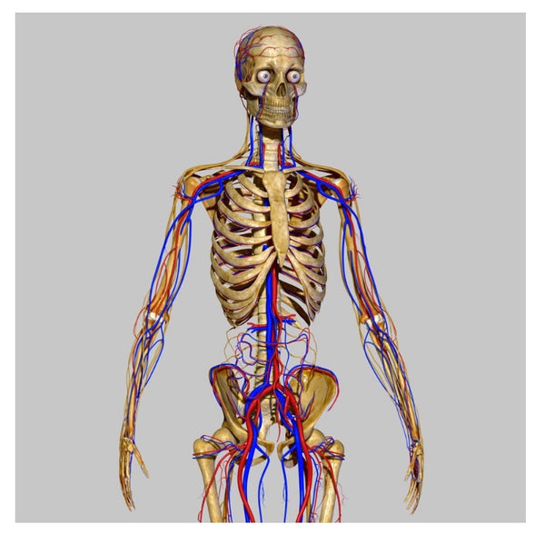 Anatomy and Physiology Level 3 (online training)