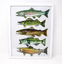 Load image into Gallery viewer, 11x14 Fish Art Print of Salmon, Brown Trout, Walleye, Large Mouth Bass and Cut Throat Trout