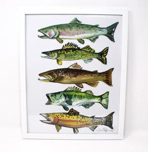 11x14 Fish Art Print of Salmon, Brown Trout, Walleye, Large Mouth Bass and Cut Throat Trout