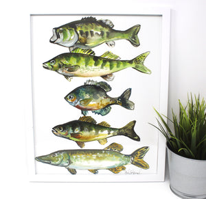Lake Pan Fish Art Print, 11x14, Outdoor Decor, Wall Art