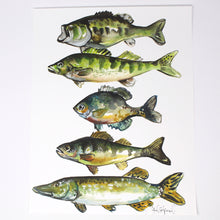 Load image into Gallery viewer, Lake Pan Fish Art Print, 11x14, Outdoor Decor, Wall Art