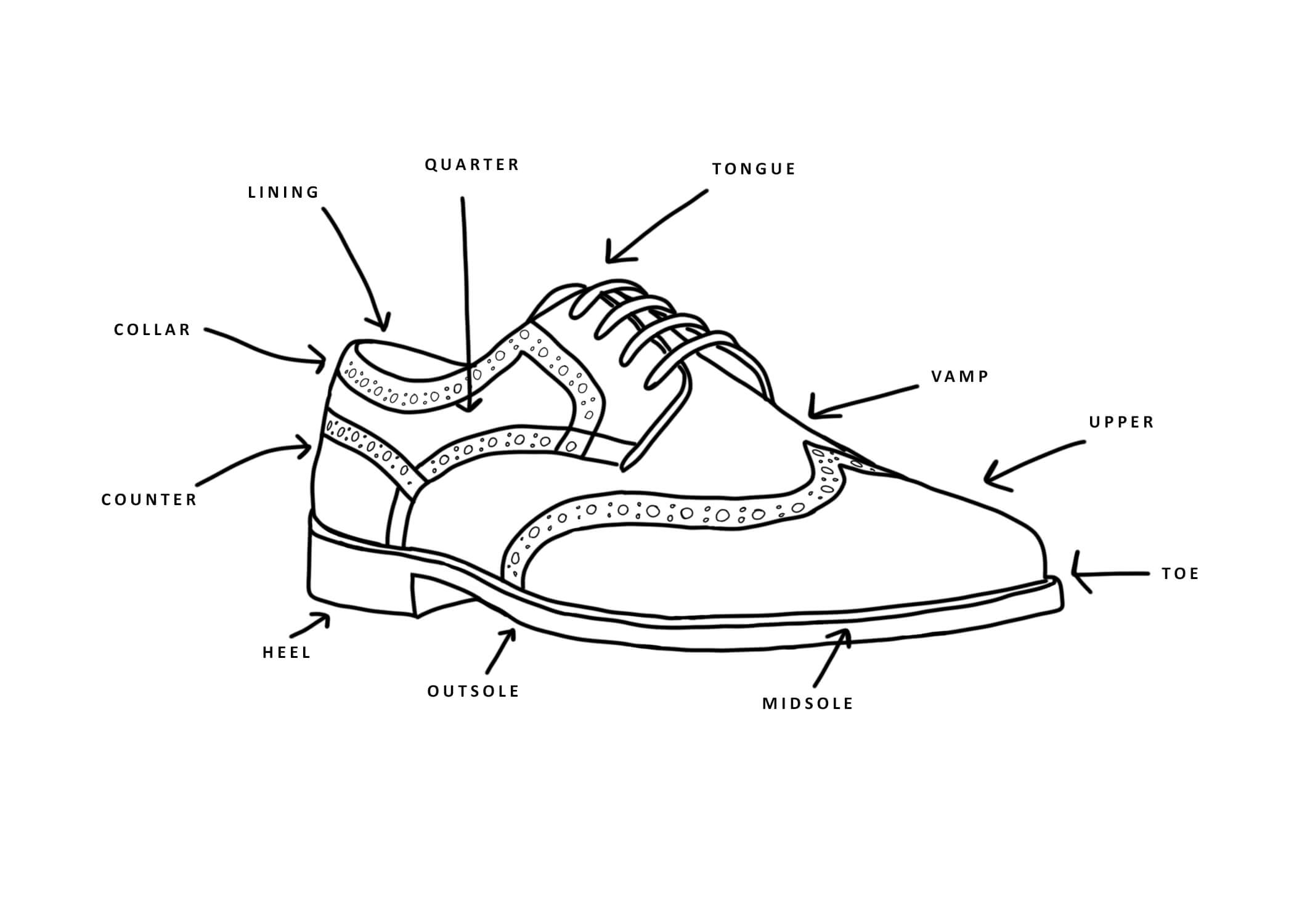 The Anatomy of a Shoe Diagram With Glossary