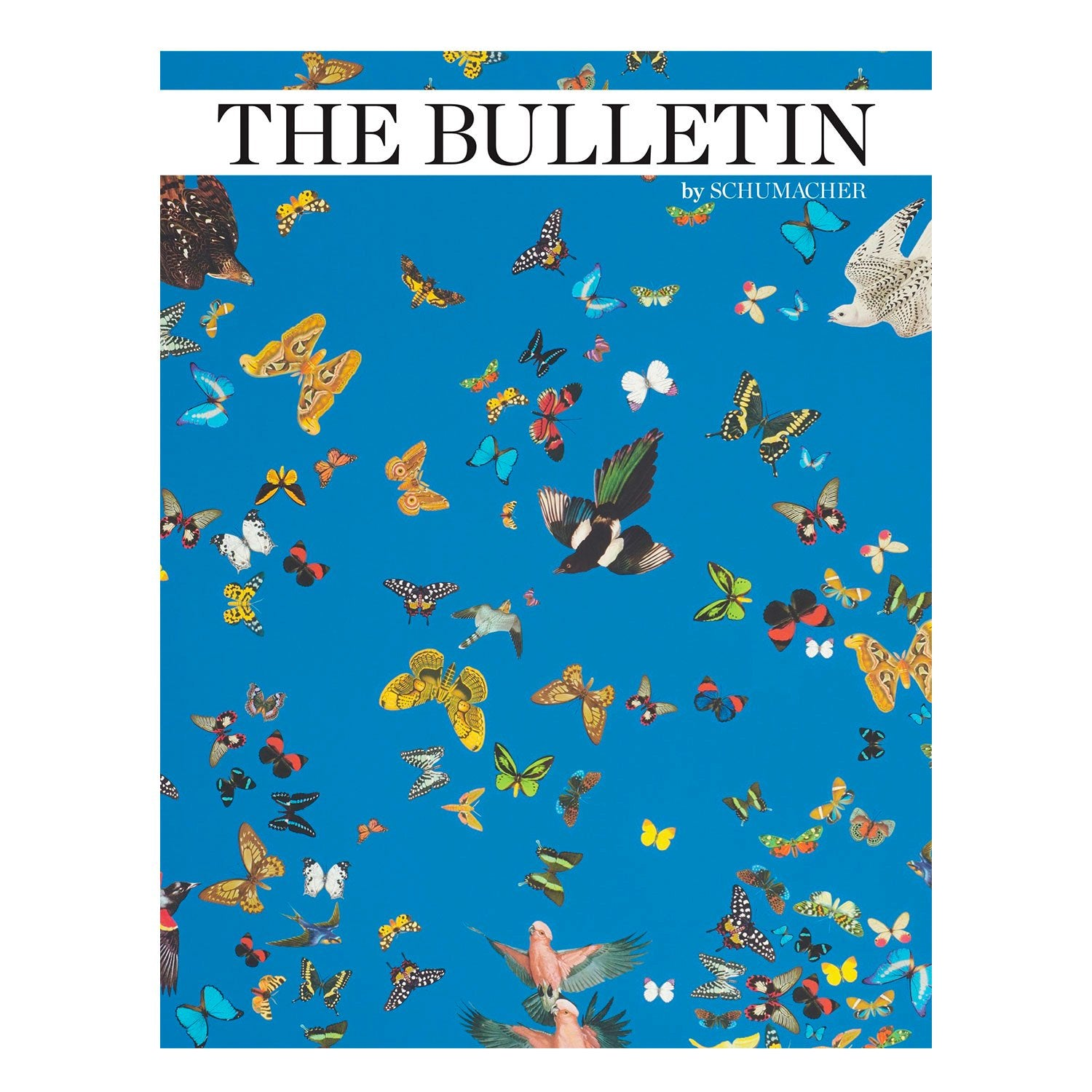 The Bulletin, Volume 10