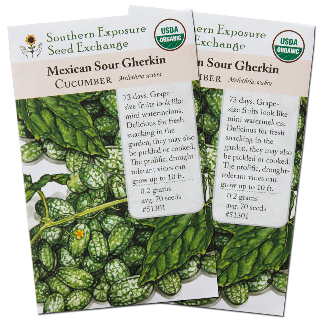 Certified Organic Cucamelon Seeds (Mexican Sour Gherkin/Mouse Melon), Two Pack of 70 Seeds Each