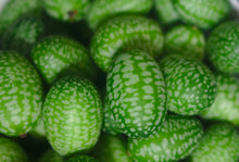 Load image into Gallery viewer, Certified Organic Cucamelon Seeds (Mexican Sour Gherkin/Mouse Melon), Two Pack of 70 Seeds Each