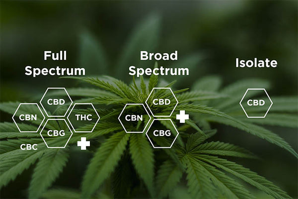 Understanding The Types of CBD