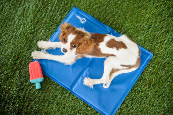 COOLING PET MAT | ICE MAT | GF Pet