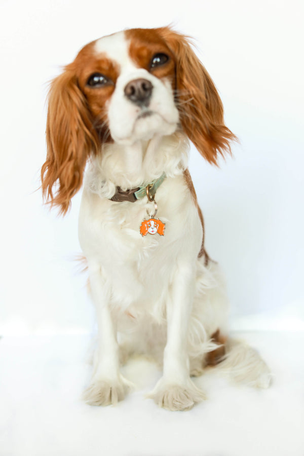 Cavalier King Charles face charm | BLACK & TAN