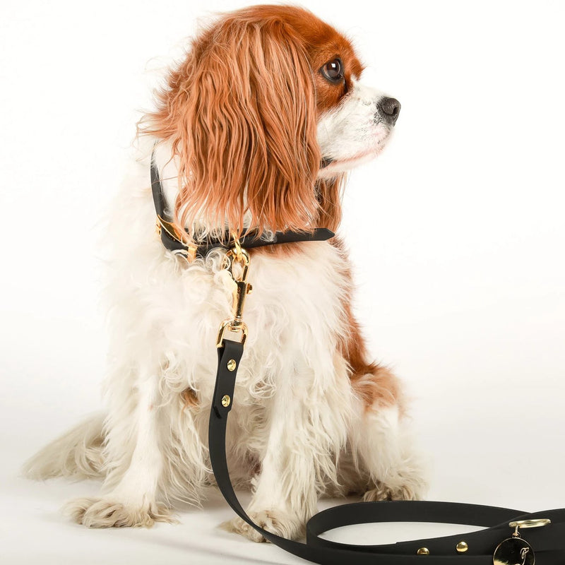 Leash and Collar set | Park Avenue *WATERPROOF* Black Vegan Leather