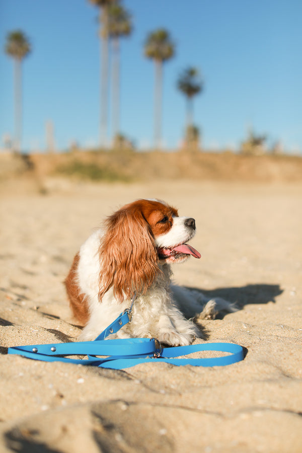 VENICE BEACH Luxe Leash