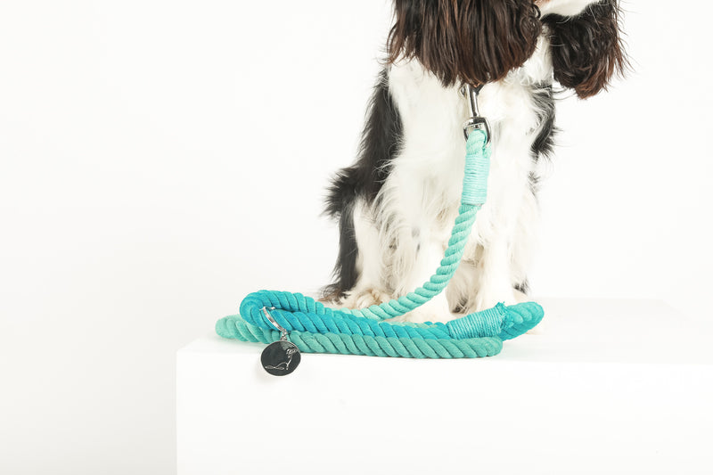 OCEAN VIEWS V2 Ombré Rope Leash