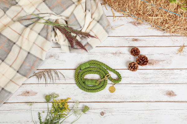Rope Leash Green - TARTE AUX POMMES