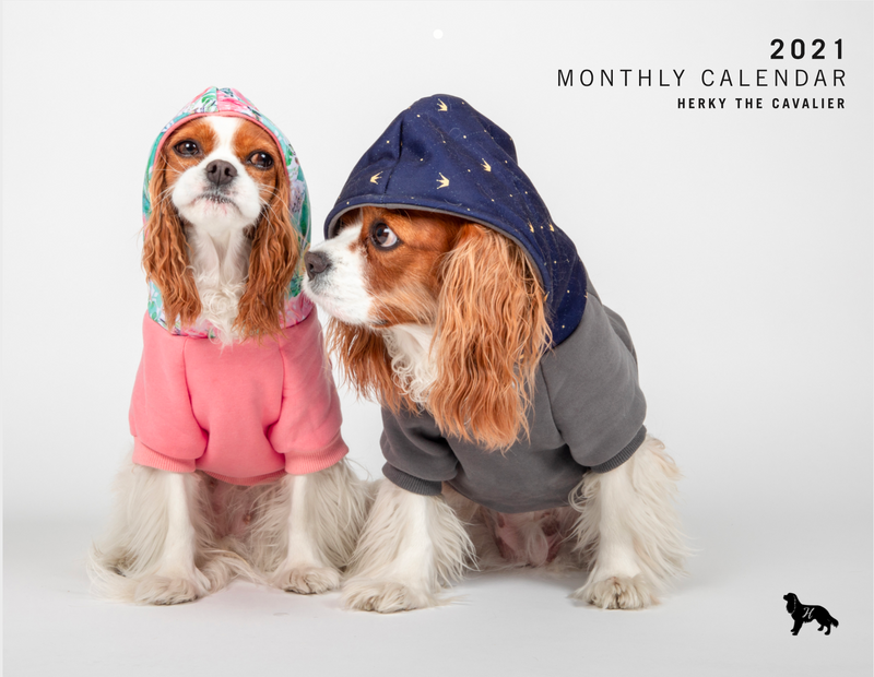 HERKY THE CAVALIER 2021 CALENDAR