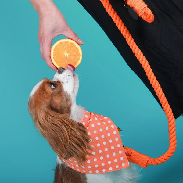 ORANGE CRUSH'D BANDANA