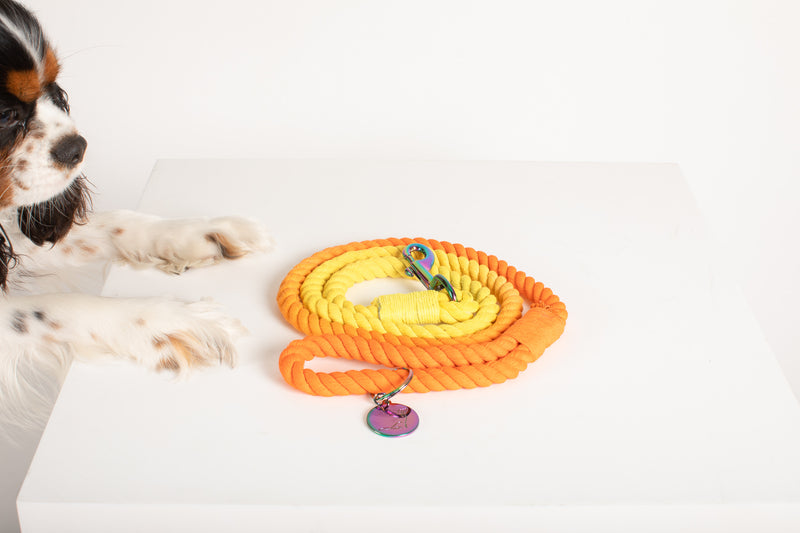 DREAMSICLE Ombré Rope Leash