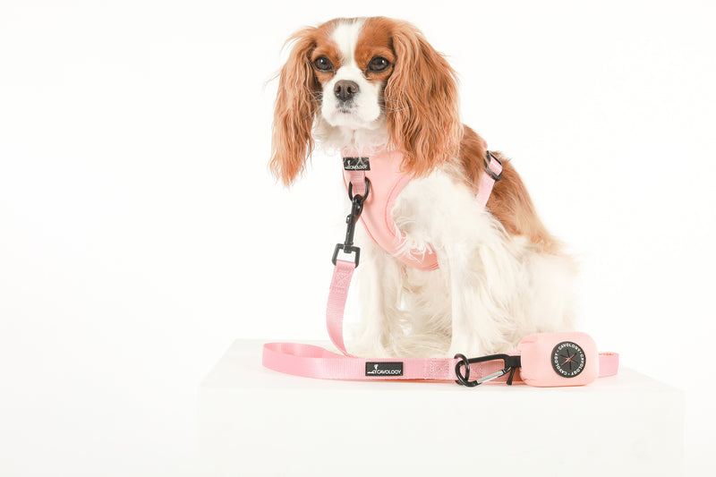 ADJUSTABLE HARNESS - Peach Bellini