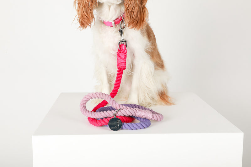SNOW CONE Ombré Rope Leash