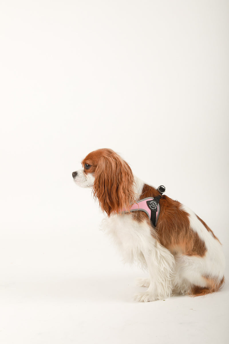 Tre Ponti adjustable pink harness