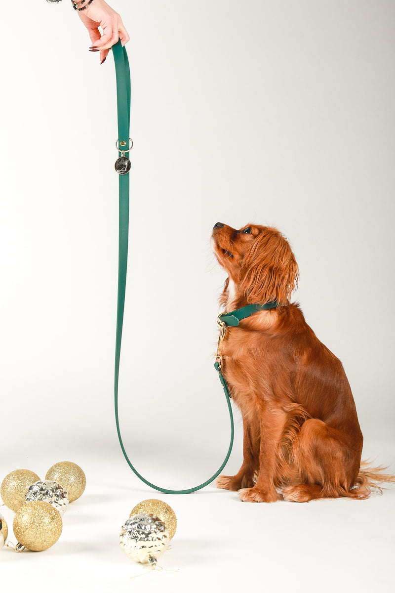 Leash and Collar set | 5th Ave Green Vegan Leather