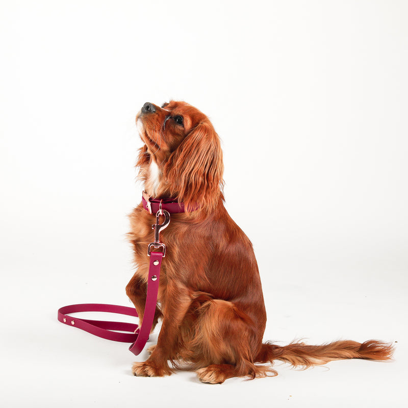 Leash and Collar Set | Madison Avenue Vegan Leather